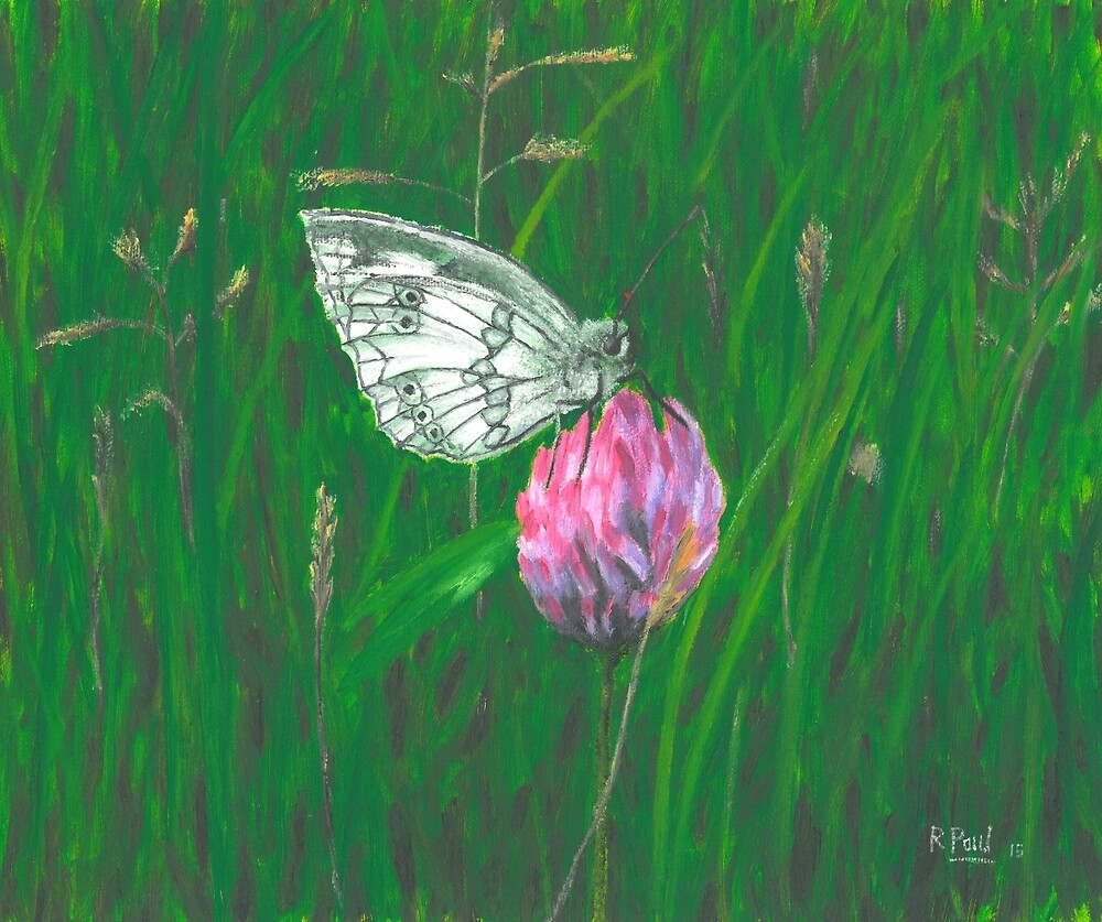 Marbled White by Richard Paul