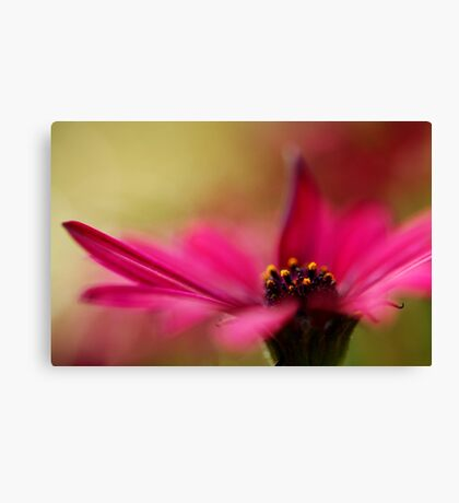 Pink and Dreamy Canvas Print