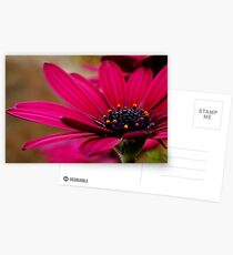 Purple Daisy Postcards