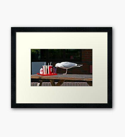 Gull-Ping it down Framed Print
