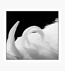 plumed curl Photographic Print