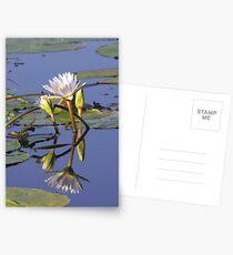 Lilies - Okavango Delta, Botswana Postcards