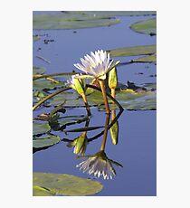 Lilies - Okavango Delta, Botswana Photographic Print