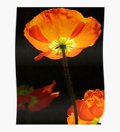 Poppy so Bright! Poster