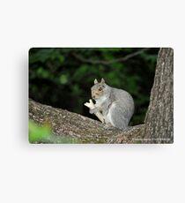 Successful Squirrel Canvas Print