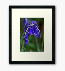Bluebell  (Spring) Framed Print