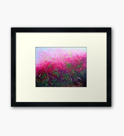 Bursting with colour Framed Print