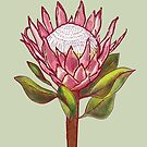 King Protea Colour II by h-creative