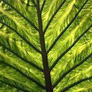 Giant leaf by Esther  Moliné