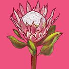 King Protea Colour III by h-creative