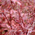 The Broken Red Web by vigor