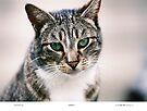 Widget The Cat by Chriss Pagani