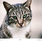 Widget The Cat by Chriss Pagani