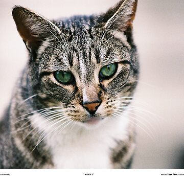 Widget The Cat by Pagani