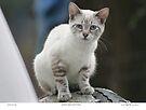 Rescue Kitten Fran by Chriss Pagani