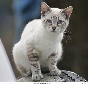 Rescue Kitten Fran by Pagani