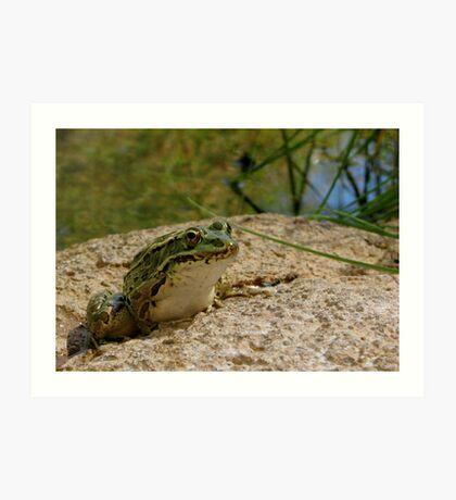 Chiricahua Leopard Frog Art Print