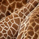 Giraffe Wallpaper by Paula McManus