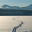 Morning Tracks by bberwyn