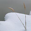 Spring Snow by bberwyn