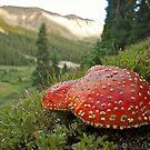 Mountain Mushrooms by bberwyn