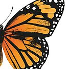 Monarch Butterfly   Right Wing   Vintage Butterflies   Butterfly Wings   Diptych    by EclecticAtHeART