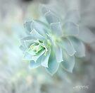 Garden wonder by aMOONy