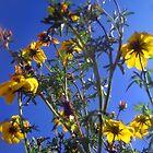 Summer Sky Garden 2 by Jaeda DeWalt