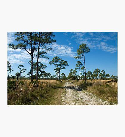 Flatwood Preserve Pine Island FL Photographic Print
