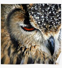 Owl Feathers Poster