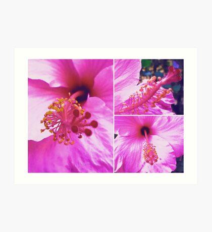 Pink Hibiscus  Art Print