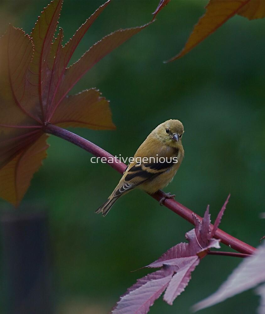 little finch by creativegenious