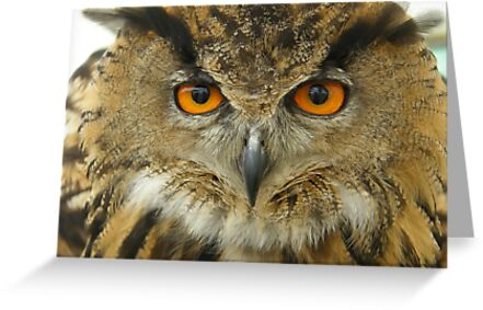 Owlook at you! by IngridSonja
