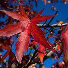 Autumn Blast by Martin Smart