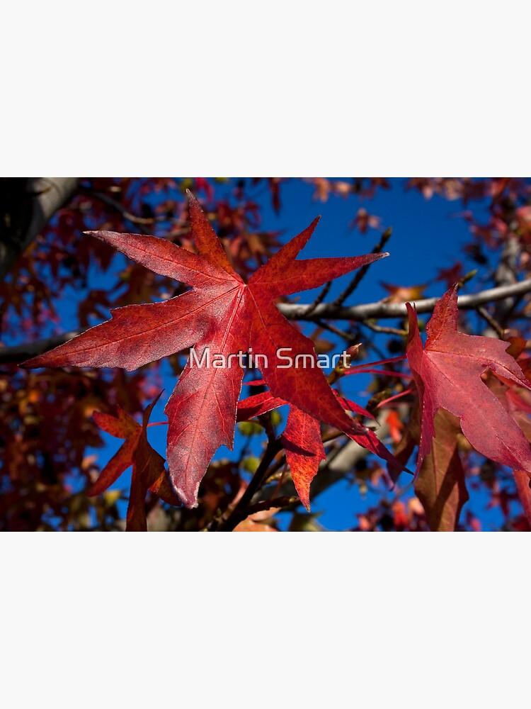 Autumn Blast by MartinSmart