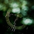 Web Spinning by Phillip M. Burrow