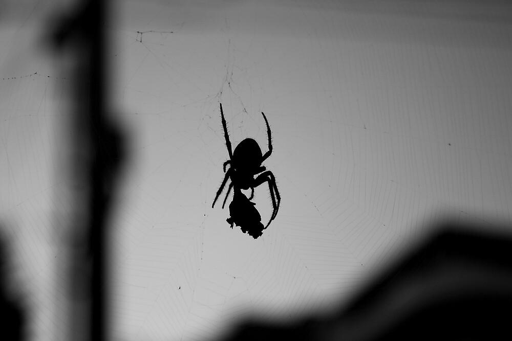 Spider's Din by ShanaLynn