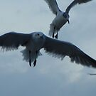 Open Flight of the Gull by Mindy Miller