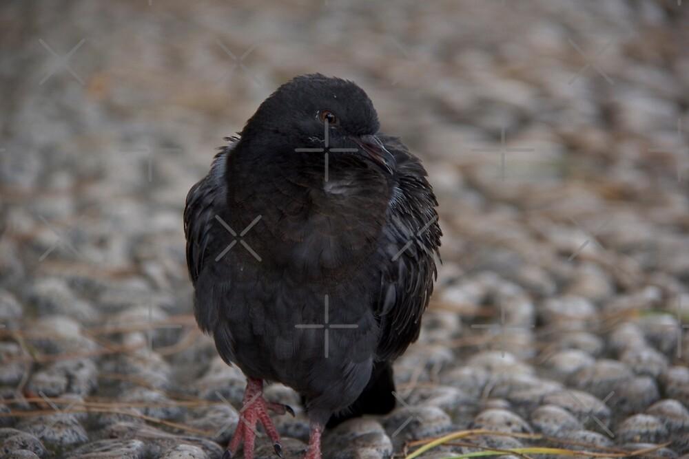 The Raven by Raquel Fletcher