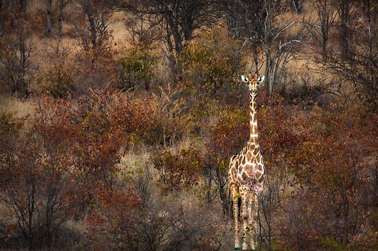 Can't tell the forest from the giraffe by Owed To Nature