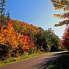 Fall~low the Road by Terri~Lynn Bealle