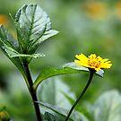 Green Yellow combination of nature by Sukanta Seal