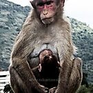 monky mother and chiled by Sukanta Seal