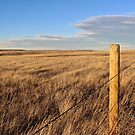 Montana Fence Line by Sun Dog Montana