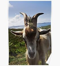 Billy theGoat Poster