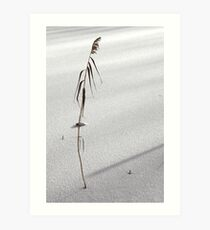 desolate reed on snow-flat Art Print