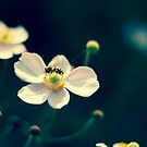 Earth laughs in flowers. by Sirenized