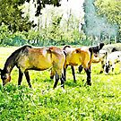 Grazing horses and cows by Giuseppe Cocco