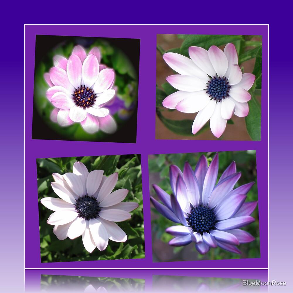 Beautiful Dreamers -  Cape Daisy Collage von BlueMoonRose
