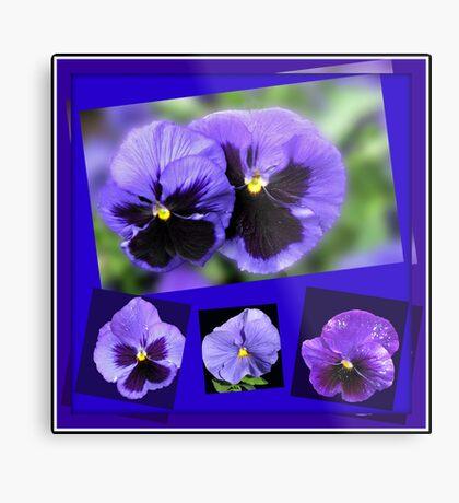 Got the Blues - Purple Pansies Collage Metallbild